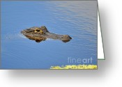 Animalia Greeting Cards - Alligator Afloat Greeting Card by Al Powell Photography USA