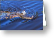 Wild Lizard Greeting Cards - Alligator in Mississippi river Greeting Card by Mingqi Ge