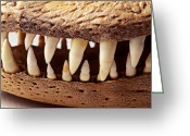 Biting Greeting Cards - Alligator skull teeth Greeting Card by Garry Gay