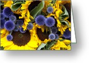 Ornamental Greeting Cards - Allium and sunflowers Greeting Card by Jane Rix