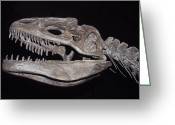 National Museum Of America History Greeting Cards - Allosaurus Skeleton Skull, Jaws Greeting Card by Jason Edwards
