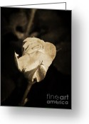 Image Overlay Greeting Cards - Alone and Confident Greeting Card by Ester  Rogers