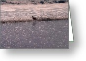 Spume Greeting Cards - Alone in the Glitter Greeting Card by Mary Hurst