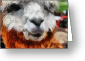 Yarn Greeting Cards - Alpaca Greeting Card by Michelle Calkins