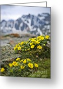 Summit Greeting Cards - Alpine meadow  Greeting Card by Elena Elisseeva