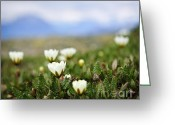 Summit Greeting Cards - Alpine meadow in Jasper National Park Greeting Card by Elena Elisseeva