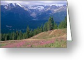 Fireweed Greeting Cards - Alpine Meadow in the Canadian Rockies Greeting Card by George Oze