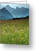 Wildflower Photography Greeting Cards - Alpine Meadow Greeting Card by Terry Roberts Photography