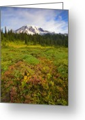 Cap Photo Greeting Cards - Alpine Meadows Greeting Card by Mike  Dawson