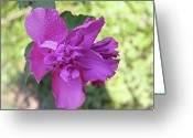 Althea Greeting Cards - Althea Greeting Card by Barry Jones