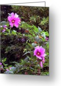 Althea Greeting Cards - Althea Greeting Card by Fred Jinkins