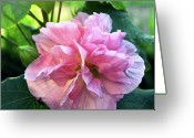 Kevin W .smith Greeting Cards - Althea Rose of Sharon Greeting Card by Kevin Smith