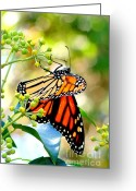 Glenn Mccurdy Greeting Cards - Amazing Aviator Greeting Card by Glenn McCurdy