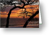 Sunset Posters Greeting Cards - Amber and Rose Greeting Card by Johanne Peale