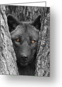 Mammal Photograph Greeting Cards - Amber Greeting Card by Shari Jardina