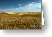 Wheatfields Photo Greeting Cards - Amber Waves of Golden Grain Greeting Card by Reflective Moments  Photography and Digital Art Images