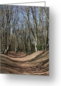 Iceni Greeting Cards - Ambresbury Banks Bronze Age fortification Greeting Card by David Pyatt