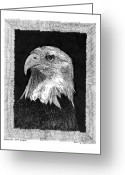 Eagle Drawings Greeting Cards - American Bald Eagle Greeting Card by Jack Pumphrey