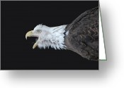 National Bird Greeting Cards - American Bald Eagle Greeting Card by Paul Ward