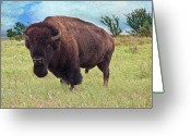 Tamyra Ayles Greeting Cards - American Bison Greeting Card by Tamyra Ayles