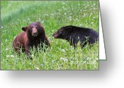 American Brown Bear Greeting Cards - American black bear with cub Greeting Card by Louise Heusinkveld