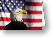 Stripes Greeting Cards - American Eagle Greeting Card by David Lee Thompson