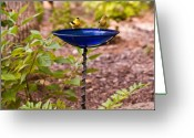 Azure Blue Greeting Cards - American Goldfinch at Water Bowl Greeting Card by Douglas Barnett