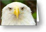 Eagle Prints Greeting Cards - American Made Greeting Card by Wild Expressions Photography