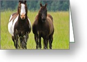 Quarter Horses Greeting Cards - American Paint Stallion and Mare Greeting Card by Karon Melillo DeVega