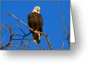 Eagle Prints Greeting Cards - American Pride Greeting Card by Paul Marto