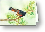American Redstart Greeting Cards - American Redstart Greeting Card by Elise Boam