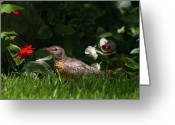 Colorado Creatures Greeting Cards - American Robin Juvenile Greeting Card by Crystal Garner