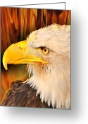 Marty Koch Greeting Cards - Americasn Bald Eagle Greeting Card by Marty Koch