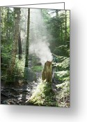 Foggy Morning Greeting Cards - Ammonoosuc Ravine Trail - White Mountains New Hampshire USA Greeting Card by Erin Paul Donovan