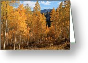 Clump Greeting Cards - Among the Aspens Greeting Card by Utah Images