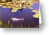 Koi Ponds Greeting Cards - Among The Lilies Greeting Card by Jan Amiss Photography