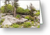 Huckleberry Bushes Greeting Cards - Among the Rocks Greeting Card by Steve Mountz