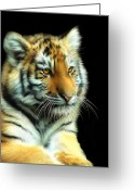 Tiger Cub Greeting Cards - Amur Tiger Cub Greeting Card by Julie L Hoddinott
