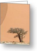 Image Type Photo Greeting Cards - An Acacia Tree Dwarfed By An Immense Greeting Card by Jason Edwards