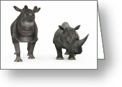 Beast Greeting Cards - An Adult Brontotherium Compared Greeting Card by Walter Myers