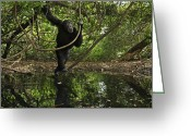 Senegal Greeting Cards - An Adult Male Lingers At Sakoto Pool Greeting Card by Frans Lanting