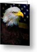 Bald Eagle Digital Art Greeting Cards - An American Icon Greeting Card by Chris Lord