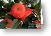 Orchards Greeting Cards - An Apple a Day Greeting Card by Karen Wiles