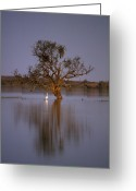Inland Greeting Cards - An Australian Pelican Beside A Dead Greeting Card by Jason Edwards