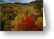 Autumn Scenes Greeting Cards - An Autumn View Greeting Card by Tim Laman
