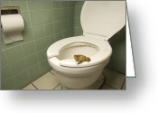 Toilet Paper Greeting Cards - An Eastern American Toad In A Motel Greeting Card by Joel Sartore