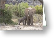 Protective Mother Greeting Cards - An Elephant Feeding Her Newborn Calf Greeting Card by Michael Poliza
