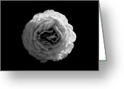 Monotone Painting Greeting Cards - An English Rose Greeting Card by Sumit Mehndiratta