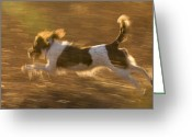 English Springer Spaniel Greeting Cards - An English Springer Spaniel Runs Greeting Card by Joel Sartore