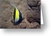 Tropical Fish Greeting Cards - An Exceptional Idol Greeting Card by Bette Phelan